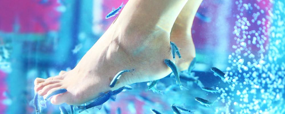 Instant fish spa: 30 minutes à 15 euros pour une personne