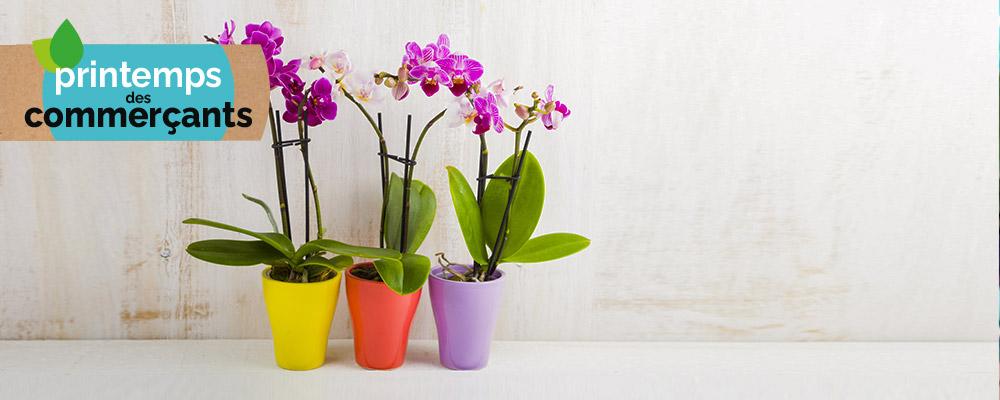 Fleuriste FLORABEL : 5€ offerts